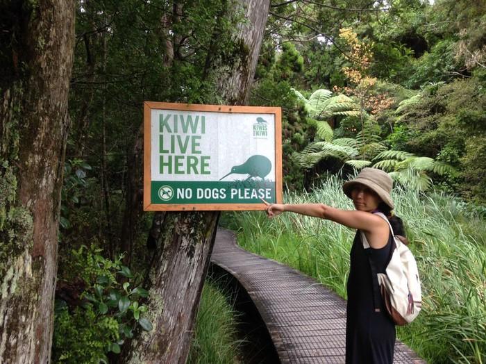 キウイに会える森ですよ