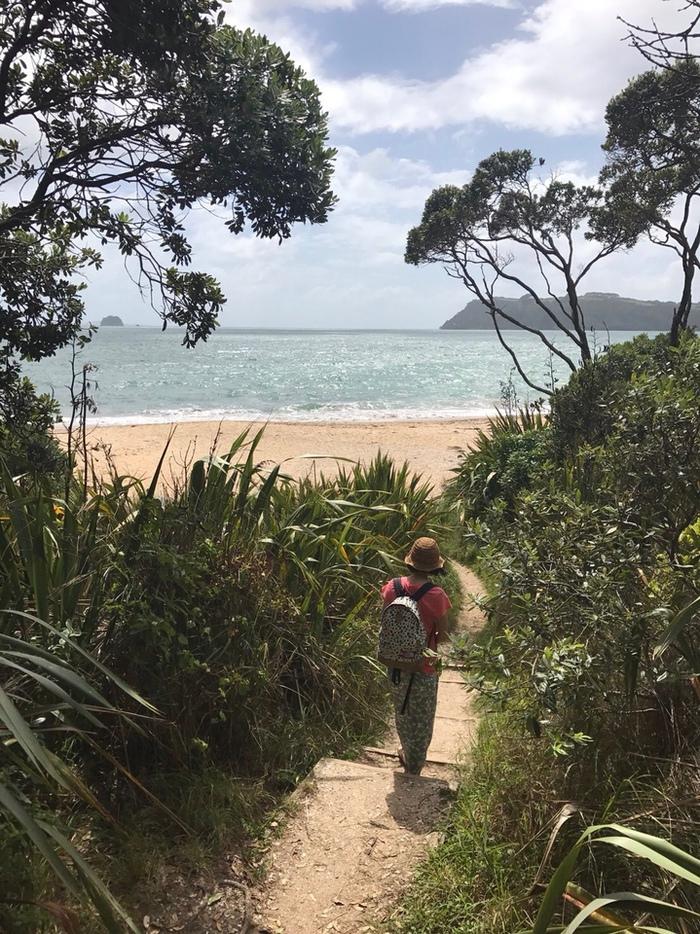 ニュージーランドの海辺。海岸と植物の風景。
