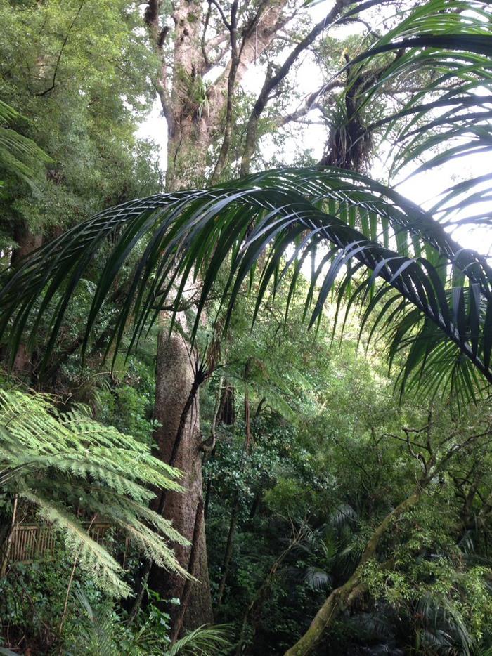 ニュージーランドの大自然のなかで森に入ってブッシュウォーク