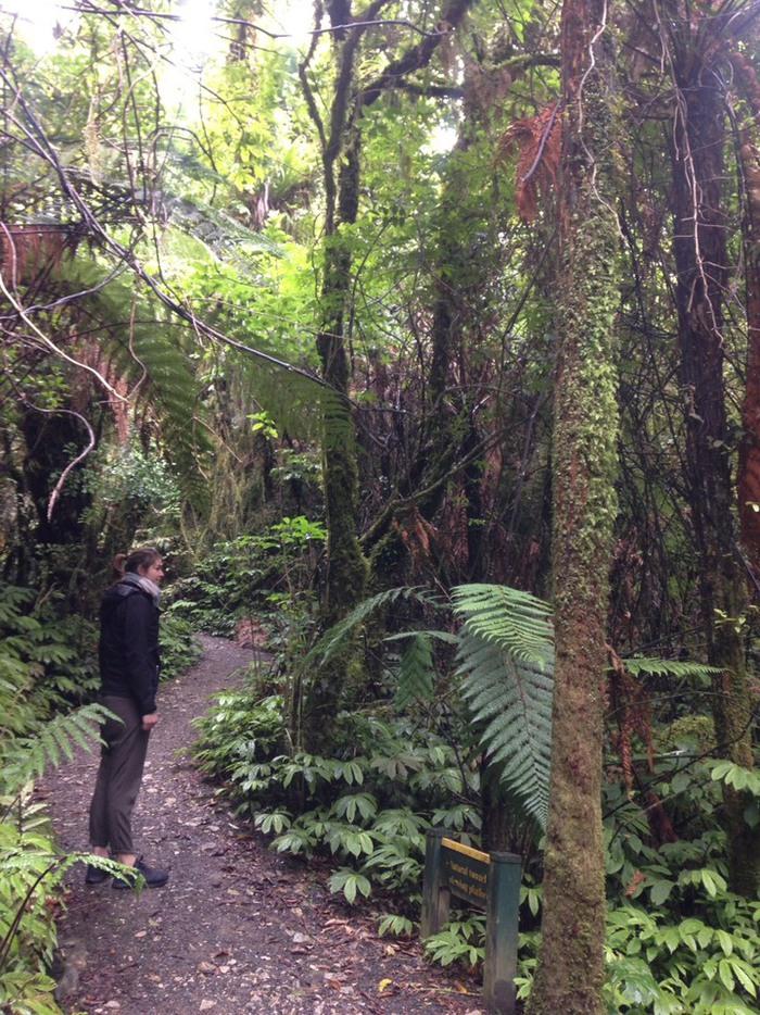 ニュージーランドの森でブッシュウォークをしているところ
