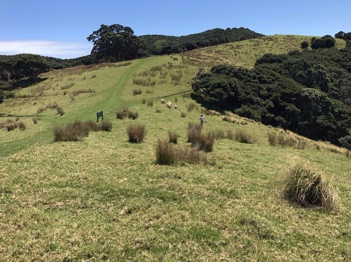 ニュージーランドの緑が広がる風景写真