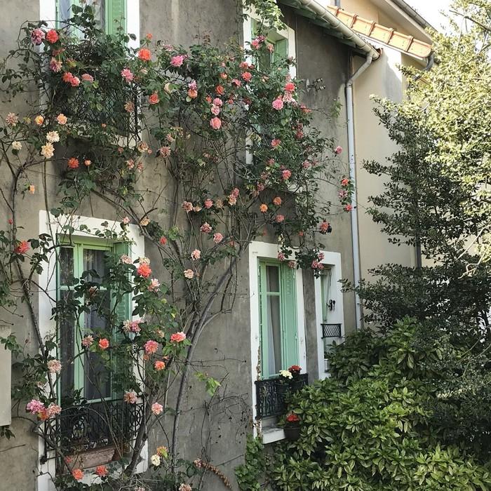 パリの庭は天気が良い時にはとても気持ちの良い場所。バラが綺麗