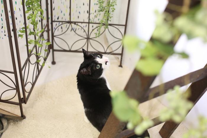 文京区、台東区、荒川区でペット撮影をお探しながら谷中の写真館ケープルヴィルで猫と一緒に撮影できます